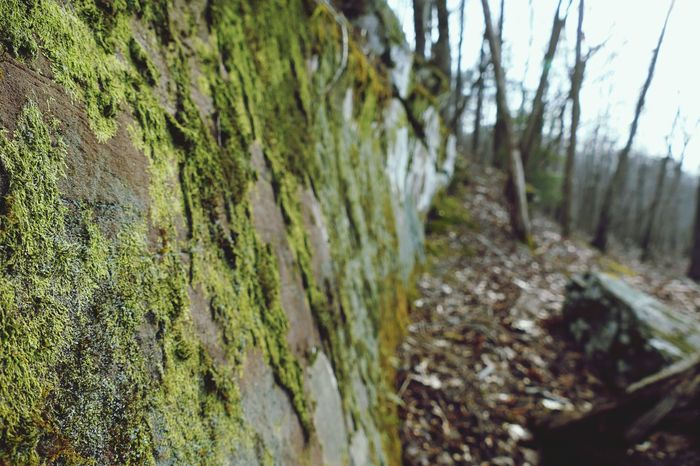 Simple Macro Left Natural Wall Wall Of Stone Rock Rock Formation Nature Old Exploring Taking Photos Live