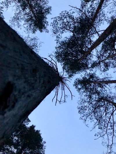 Wood Tree Sky Plant Low Angle View Nature Branch No People Day Outdoors Beauty In Nature