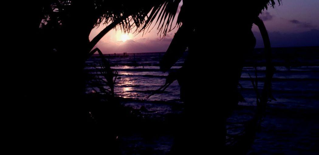 The Mobile Photographer - 2019 EyeEm Awards Tree Water Sunset Silhouette Beach Sky