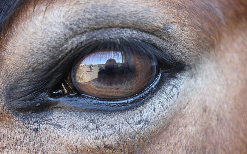 Close-up of horse eye with reflection
