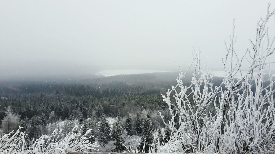 Winter Altenberg Ski Snow ❄ ☃
