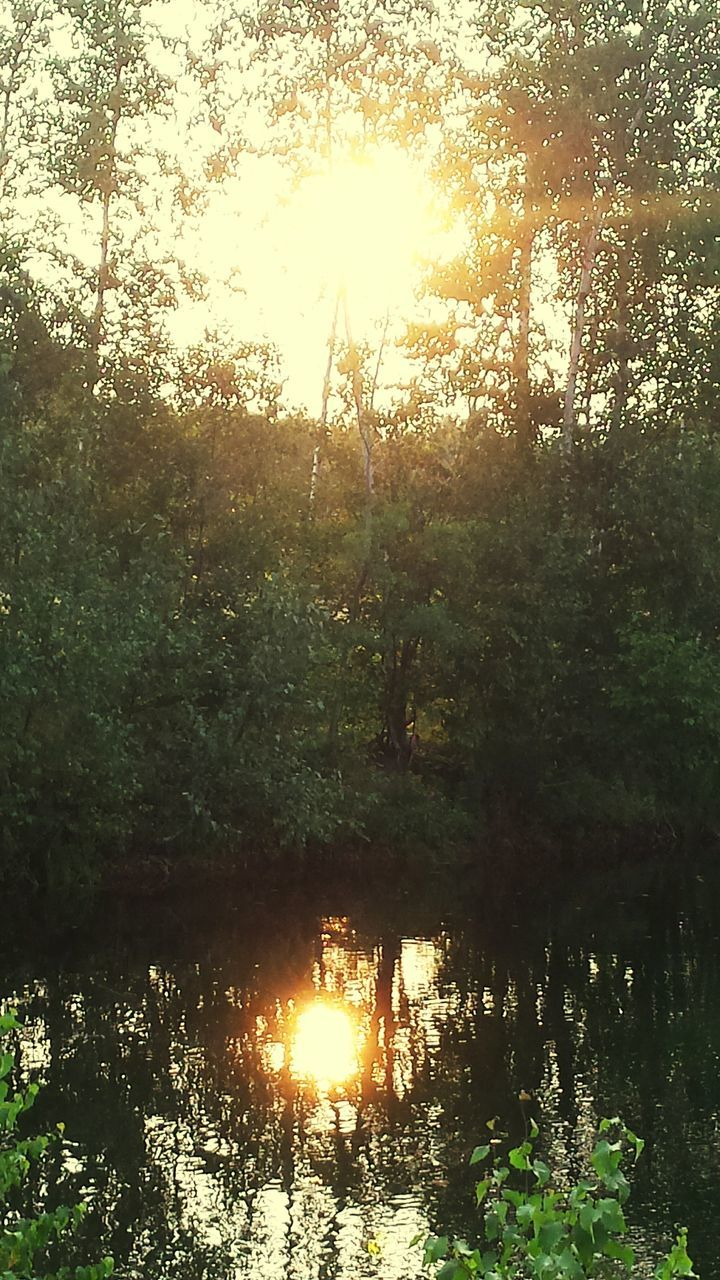 tree, reflection, nature, forest, lake, water, tranquility, sunbeam, tranquil scene, sunlight, outdoors, beauty in nature, growth, scenics, no people, sun, day, sunset, sky