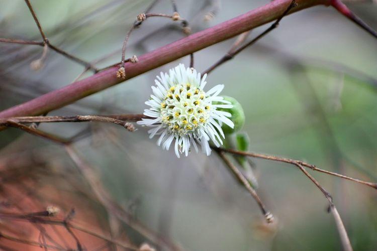 EyeEm Flowers Nature Beautiful