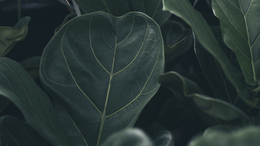 dark Plant Part