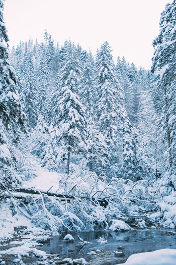 Winter Tree Snow Cold Temperature Beauty In Nature Plant Nature Tranquil Scene Scenics - Nature Forest Mountain Outdoors Water Frozen Blue