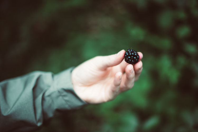Close-up of hand holding blackberry