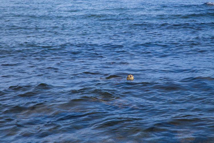 Swan swimming in sea