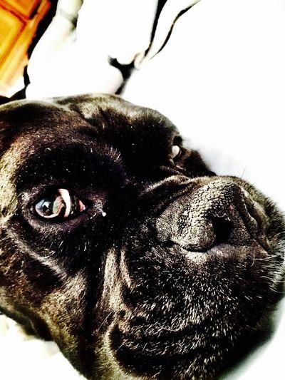 The Portraitist - 2016 EyeEm Awards Boxer Dogs Boxer Dog My Dog Cooper!!