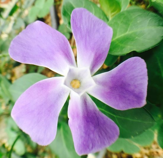 Flower Spring In Winter