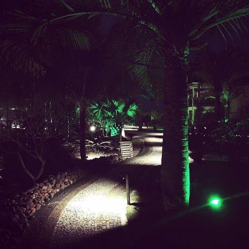 The calm before the storm. Wedding time... Brazil Wedding Travel Traveling Brasil Trees Beautitul Night