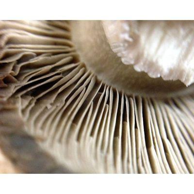 Had my olloclip at work today. Macro Food Porn Fungi All_shots Macromania Hot_shotz Royalsnappingartists Macroaddictsanonymous Nothingisordinary Rsa_macro Macro_perfection Coolshitwelike Macro_eg_treasure Macro_treasure