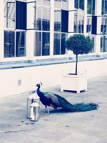 Building Exterior Animal Themes Built Structure Animal Architecture Bird Vertebrate