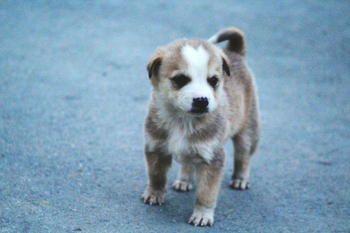 Innocence EyeEmNewHere Break The Mold Puppy Cute Eyes New Born Animal Looking For Mother Street Dog On Road Photography Pet Portraits