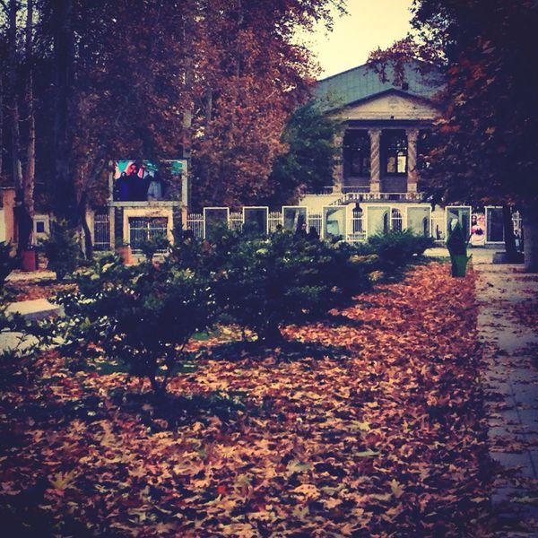 دل از آسمان بردار که وحی از خاک می رسد. First Eyeem Photo Elegance Everywhere From My Point Of View Autumn Leaves Autumn Colors Iran Colors Of Autumn EyeEm Best Shots