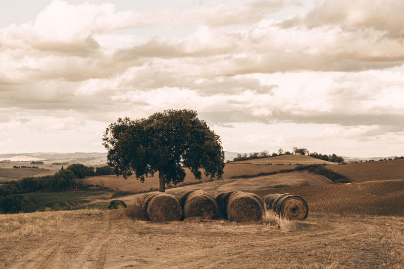 Hay Bale Tuscany Agriculture Bale  Beauty In Nature Cloud - Sky Environment Farm Field Harvesting Hay Italy Land Landscape Nature No People Outdoors Plant Rural Scene Scenics - Nature Siena Sky Tranquil Scene Tranquility Tree