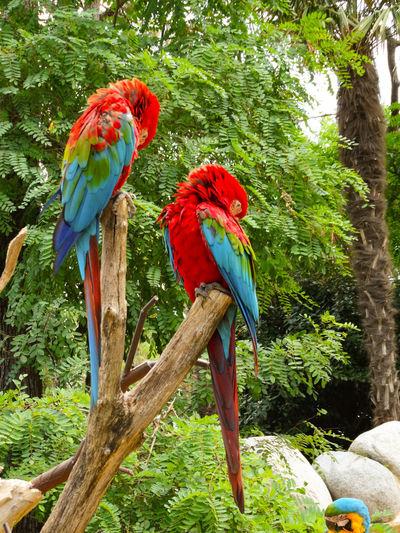 Couple of parrots Parrots Colors Explosion Of Color Tropical Bird Hummingbird Tropical Rainforest Tail