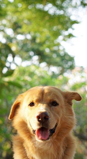 Close-up portrait of dog on tree