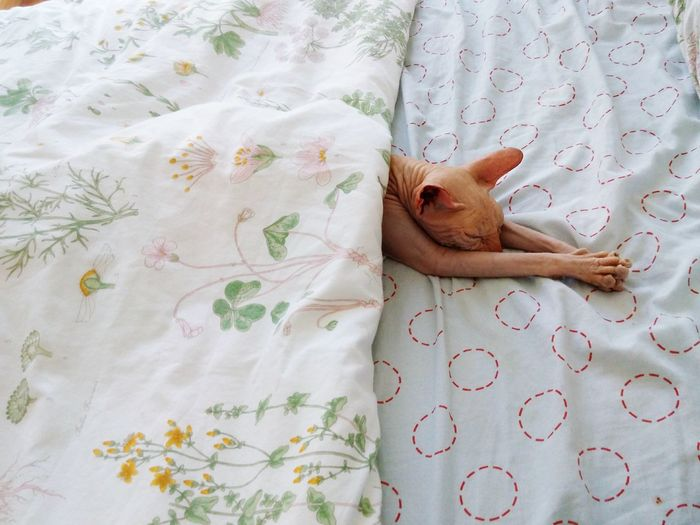 Indoors  Textile Only Women People Bed One Woman Only One Person Human Body Part Day Adult Adults Only Low Section Close-up Human Hand Cats Lovers  Pets Cats Cats Lovers  Sphynx Cat Lovers Sphynx Lover Sphynxlove Kitten Sphynxportrait Cats Of EyeEm