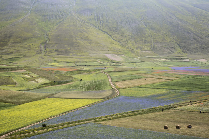 Campagna Castelluccio Countryside Fioritura Landscape Lenticchie Paesaggio Landscapes With WhiteWall Perspectives On Nature