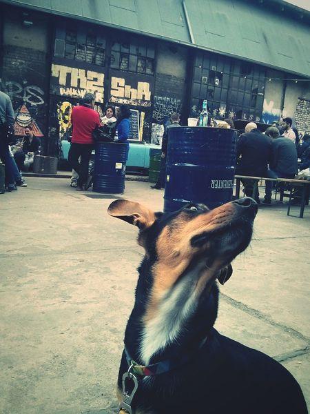 Mirando a las musarañas Minit I Love My Dog Berlinerdogs Dogstagram Dogslife Berlin Street Food