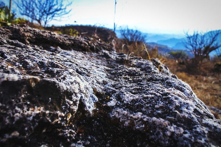 Close-up of rock on tree against sky