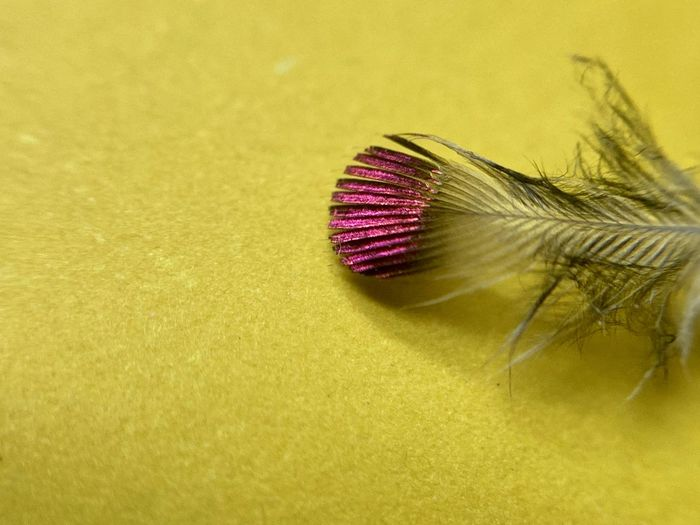Macro shot of insect on yellow background