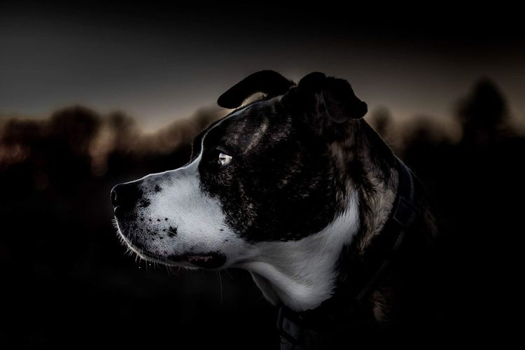 One Animal Pets Dog Animal Themes No People Mammal Animal Domestic Animals Close-up Outdoors Sky Winter