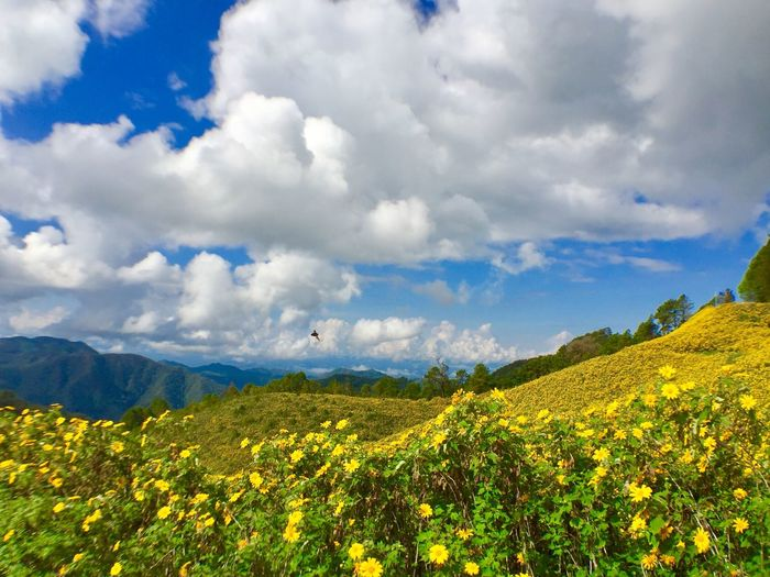 Agriculture Animal Themes Beauty In Nature Bird Cloud - Sky Day Field Flower Flying Growth Landscape Mountain Mountain Range Nature No People Oilseed Rape One Animal Outdoors Plant Rural Scene Scenics Sky Tranquil Scene Tranquility Yellow