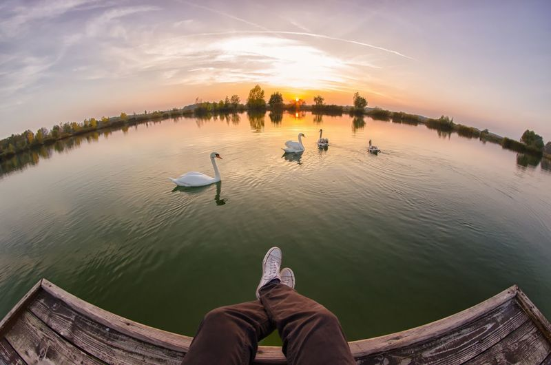 Autumn Birds Converse Day Fisheye Human Body Part Human Leg Lake Mood Nature One Person People Personal Perspective Shoe Sun Sunset Swan