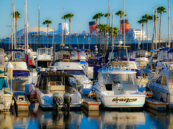 Sailboats Ships Harbour Queen Mary Nautical Vessel Sea Day Waterfront Shoreline Seaside Blue No People California Water Palm Palm Tree