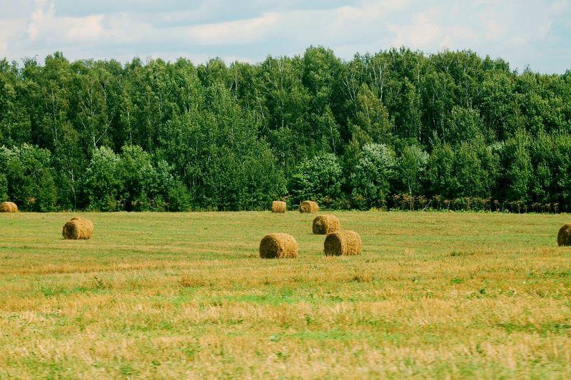 Tree Hay Bale