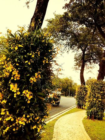 Sideways Sidewalk Along The Way Tree Ornamental Plant Plant On Tree Orchid Orchid Flower Orchid On Tree View Landscape View Photography Landscape Photography Perspective Perspective Photography Nature Nature Photography Orchids Collection Flower On The Tree Flower Collection Car On The Road