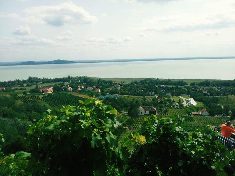 Balaton - Hungary Badacsony Vineyard🍇 Wine Grapes 🍇 Beauty In Nature Landscape