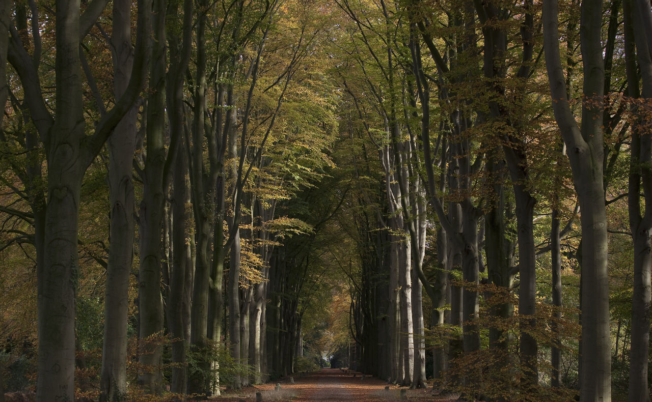 forest, tree, the way forward, growth, nature, tree trunk, no people, day, outdoors, beauty in nature