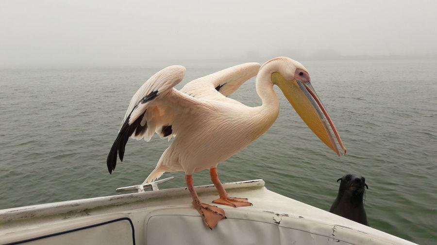 View of pelican on sea against sky