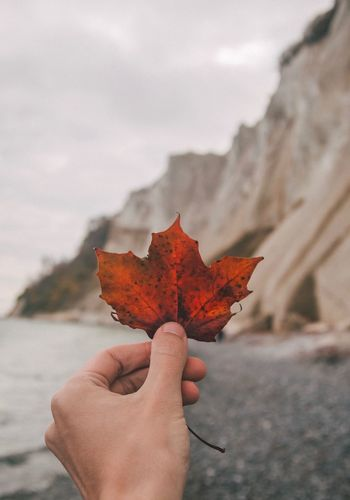 Fall Vibes in Denmark Autumn Colours Autumn🍁🍁🍁 Autumn Leaves Autumn Autumn Fall Leaves Fall Colors Fall EyeEm Selects Human Hand Hand Human Body Part Autumn One Person Unrecognizable Person Nature Maple Leaf Holding First Eyeem Photo