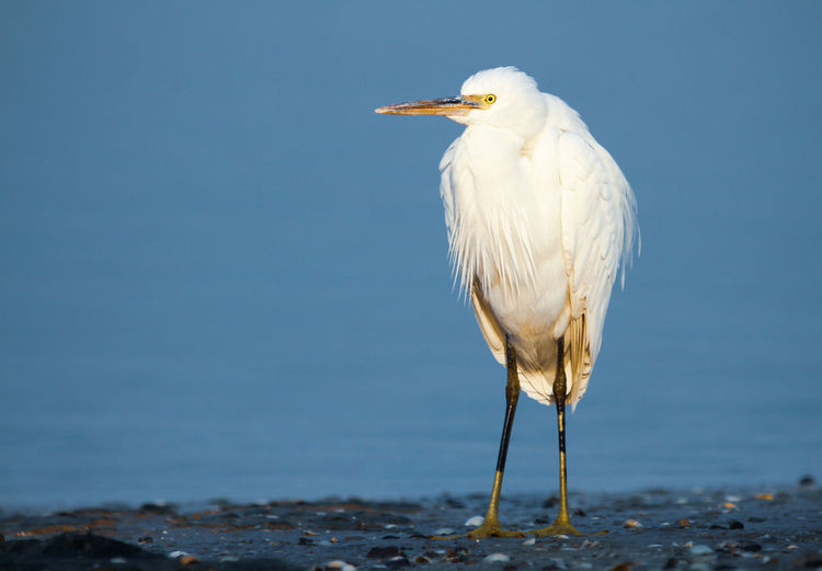 Close-up of egret perching on rock against sea and sky