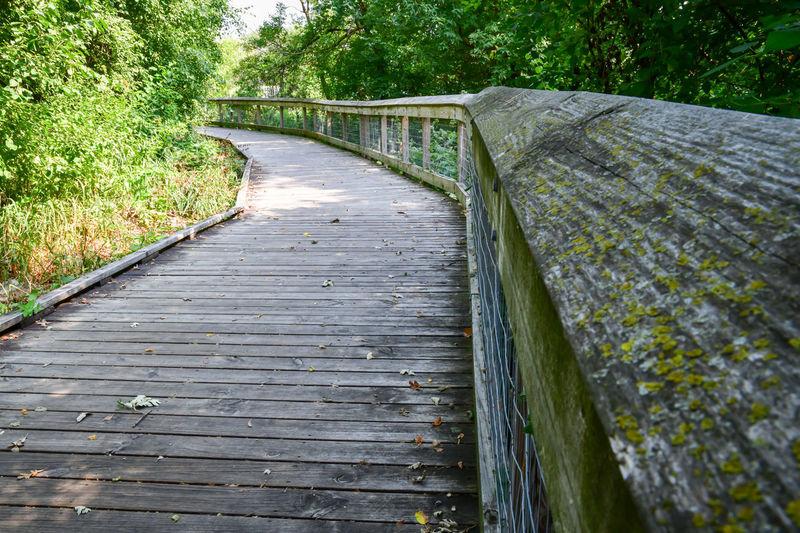 Boardwalk on footbridge amidst trees