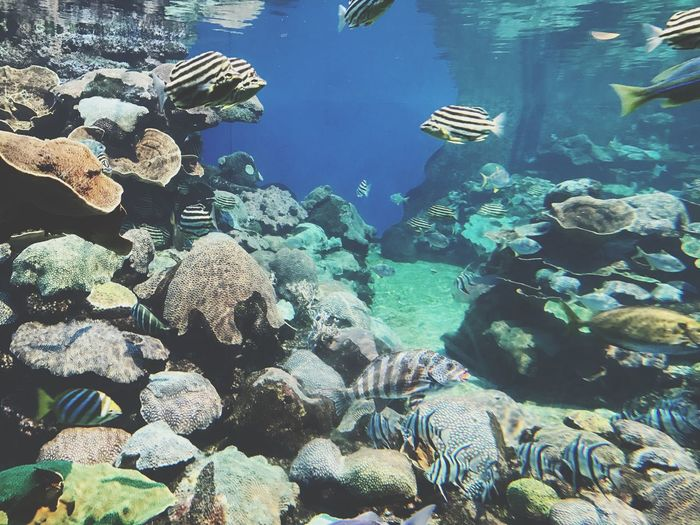 Underwater Coral Sea Life Beauty In Nature Sea Tropical Fish Tropical Marine Australia