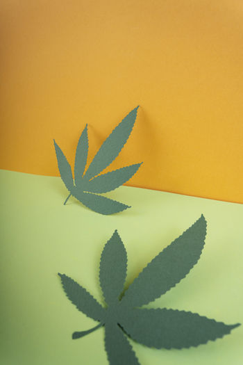 Close-up of paper plant against yellow wall