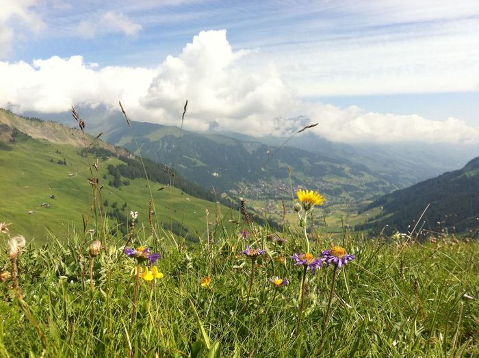 Adelboden-Lenk Schweiz Schweizer Alpen Adelboden Beauty In Nature Berner Oberland Cloud - Sky Day Field Flower Freshness Grass Green Color Growth Landscape Mountain Mountain Range Nature No People Outdoors Plant Scenics Sky Tranquil Scene Tranquility