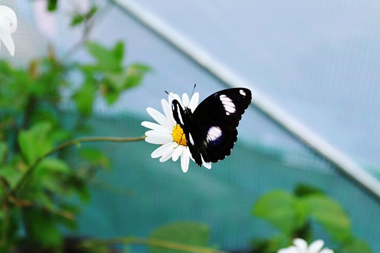 Flower Fragility Nature Freshness Beauty In Nature Insect Butterfly - Insect Flower Head Plant Petal One Animal Growth Animal Themes Blooming No People Outdoors Close-up Pollination Day