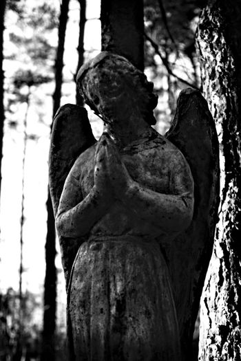 Black And White Angel Kenilworth  Ontario Canada