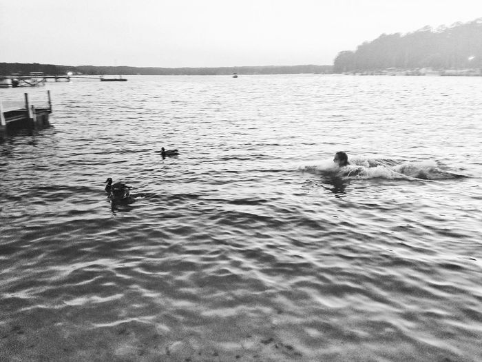 Adventure Club Black And White Water My Girl And Some Ducks Beautiful Action Shot Lake Life Lifes Good
