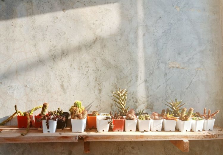 Potted cactus on table against wall