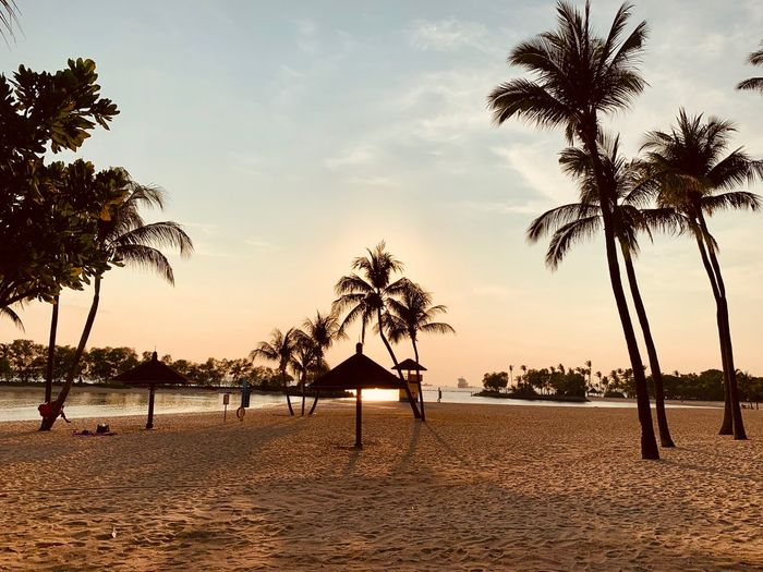 Beautiful evening Tree Sky Plant Palm Tree Beach Land Tropical Climate Nature Beauty In Nature Sunset Scenics - Nature Tranquility Silhouette Tranquil Scene Water No People Coconut Palm Tree Outdoors My Best Photo