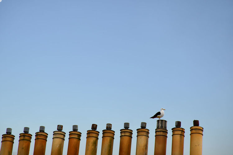 Bird Photography Chimney Architectural Column Architecture Bird Birds Blue Building Exterior Built Structure Clear Sky Copy Space Day High Section History In A Row Low Angle View Nature No People Outdoors Perching Roof Side By Side Sky The Past