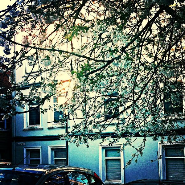 Onmywaytowork On A Beautiful Day ♥ Happy Day Tree