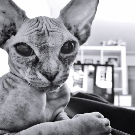 could you change the channel please! 😂 i would like to see something else xD Pets Cat Lovers Hairless Cat Eyemanimals Blackandwhite EyeEm Best Shots Eye4photography  Enjoying Life Lovelovelove Hanging Around Cat