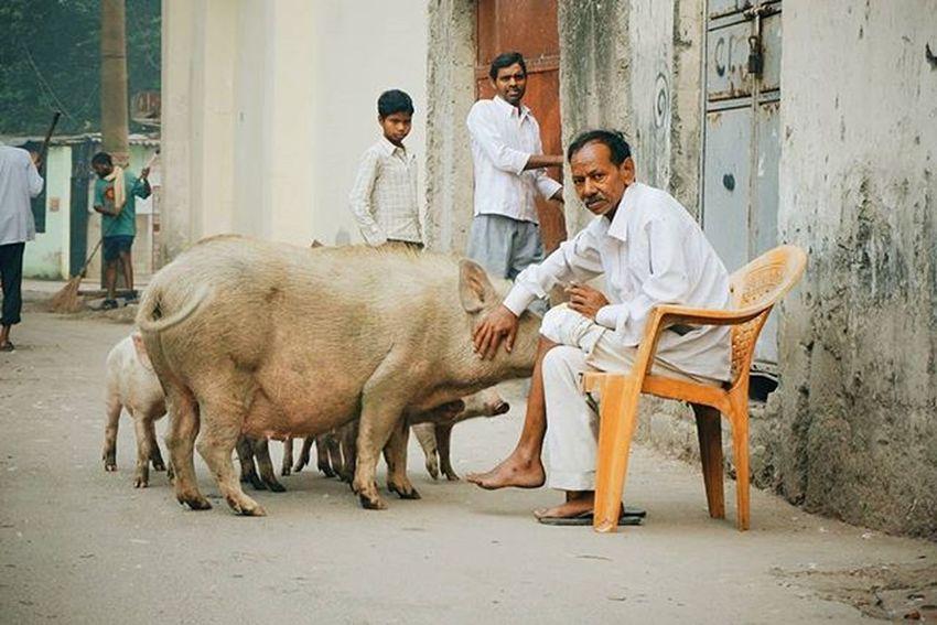 🐖🐷🐷 Newdelhi India Takhtastudio Takhta2india Travel Indiatravel Pig Babi Photography The Street Photographer - 2017 EyeEm Awards